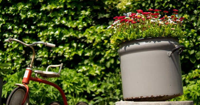 bloemen plant in pot