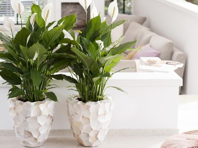 Grote Plant Woonkamer : Grote blikvangers pokon groen doet je goed