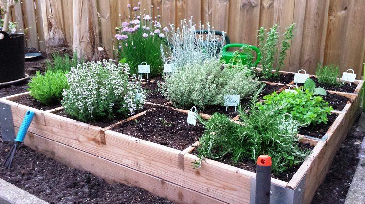 Kruiden in de moestuinbak pokon groen doet je goed for Diana tuin