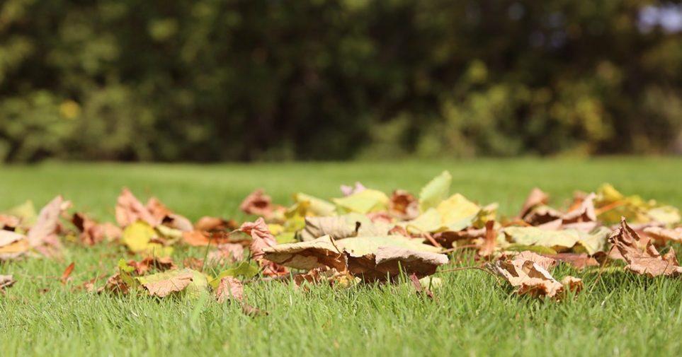 bladeren-van-gazon-halen